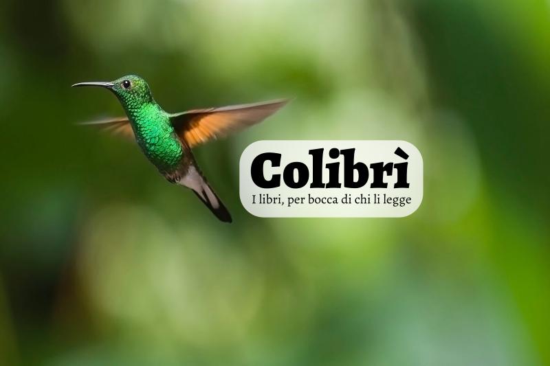 Colibrì 03